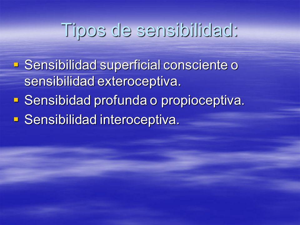 Tipos de sensibilidad: Sensibilidad superficial consciente o sensibilidad exteroceptiva. Sensibilidad superficial consciente o sensibilidad exterocept