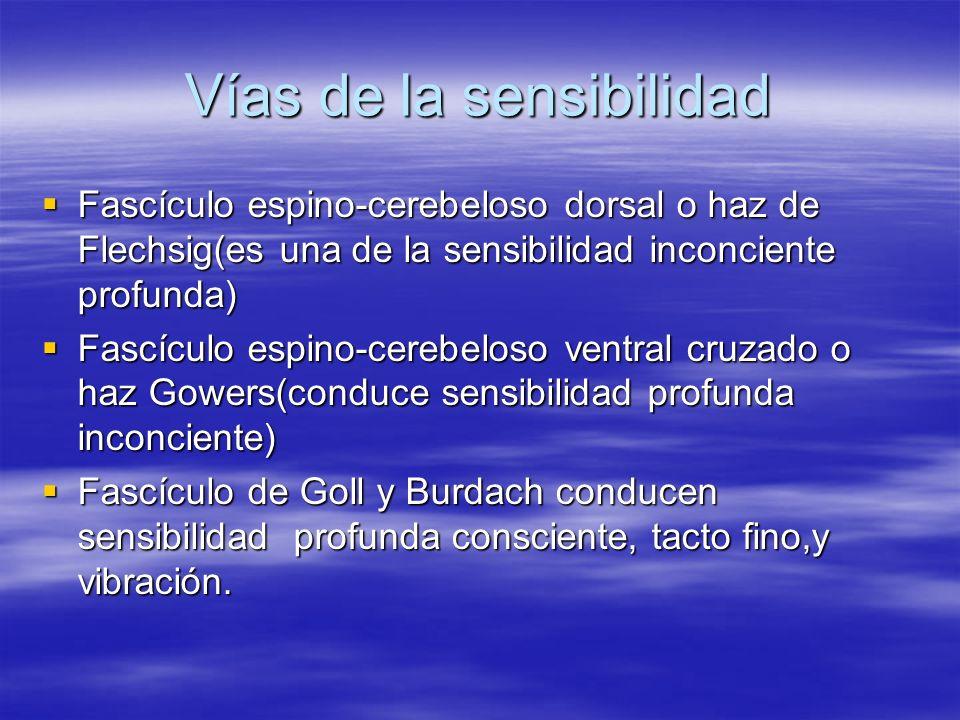 Vías de la sensibilidad Fascículo espino-cerebeloso dorsal o haz de Flechsig(es una de la sensibilidad inconciente profunda) Fascículo espino-cerebelo