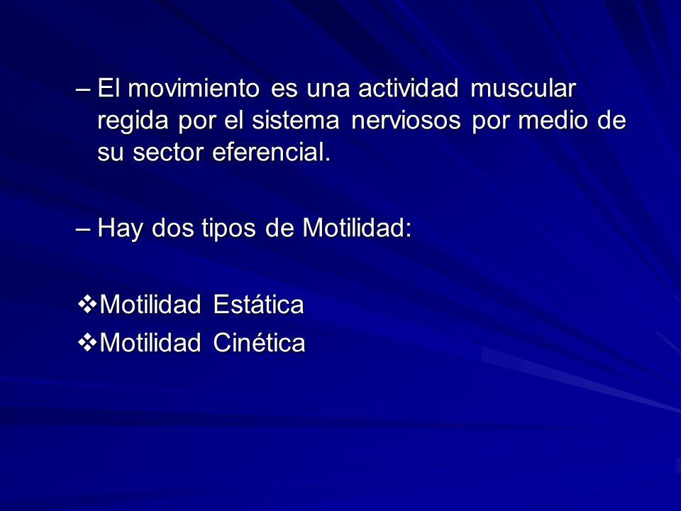 –El movimiento es una actividad muscular regida por el sistema nerviosos por medio de su sector eferencial. –Hay dos tipos de Motilidad: Motilidad Est