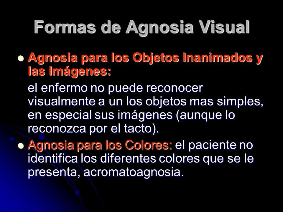 Formas de Agnosia Visual Agnosia para los Objetos Inanimados y las Imágenes: Agnosia para los Objetos Inanimados y las Imágenes: el enfermo no puede reconocer visualmente a un los objetos mas simples, en especial sus imágenes (aunque lo reconozca por el tacto).