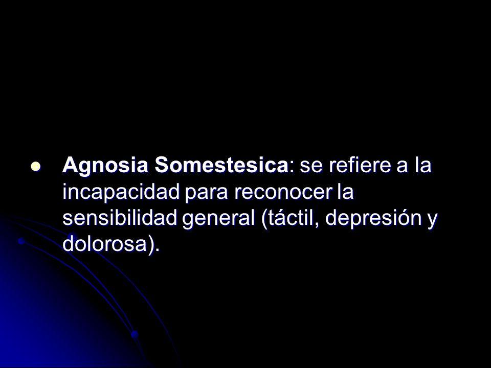 Agnosia Somestesica: se refiere a la incapacidad para reconocer la sensibilidad general (táctil, depresión y dolorosa).