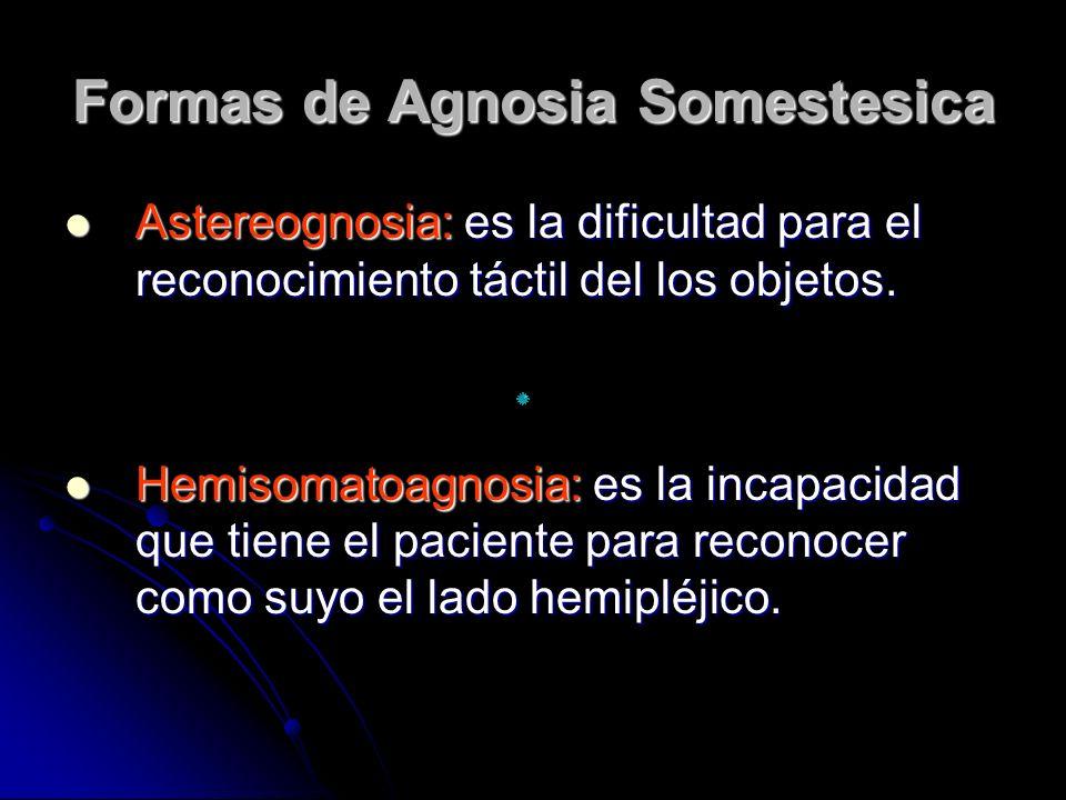 Formas de Agnosia Somestesica Astereognosia: es la dificultad para el reconocimiento táctil del los objetos. Astereognosia: es la dificultad para el r