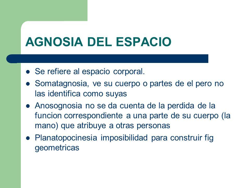 AGNOSIA DEL ESPACIO Se refiere al espacio corporal. Somatagnosia, ve su cuerpo o partes de el pero no las identifica como suyas Anosognosia no se da c