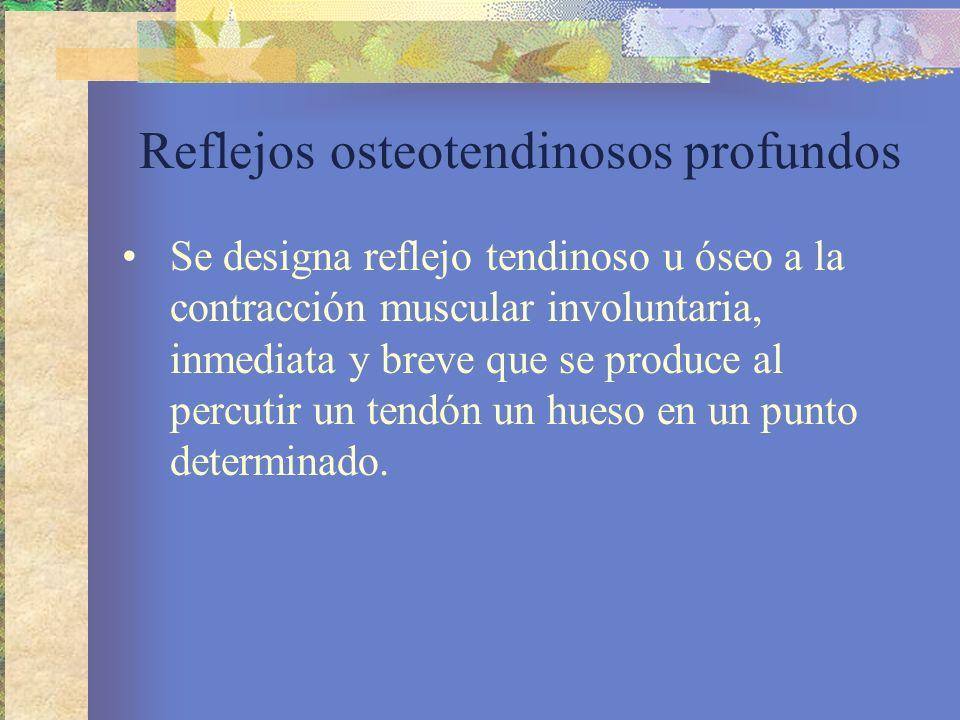 Reflejos osteotendinosos profundos Se designa reflejo tendinoso u óseo a la contracción muscular involuntaria, inmediata y breve que se produce al per