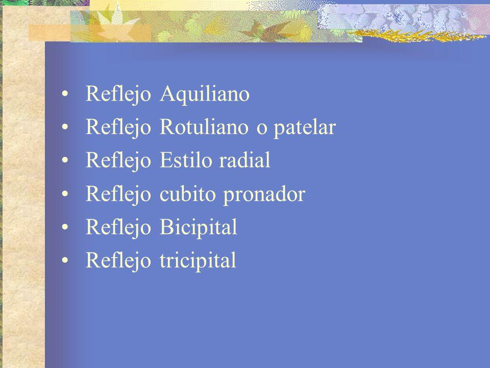 Reflejo Aquiliano Reflejo Rotuliano o patelar Reflejo Estilo radial Reflejo cubito pronador Reflejo Bicipital Reflejo tricipital