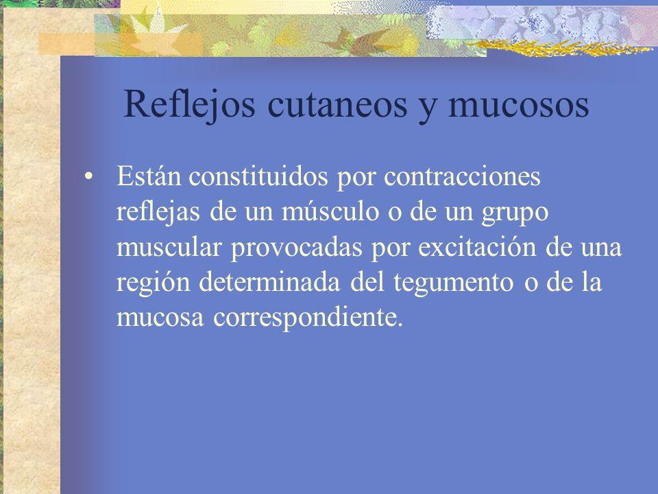 Reflejos cutaneos y mucosos Están constituidos por contracciones reflejas de un músculo o de un grupo muscular provocadas por excitación de una región