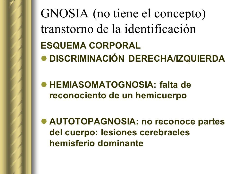 GNOSIA (no tiene el concepto) transtorno de la identificación ESQUEMA CORPORAL DISCRIMINACIÓN DERECHA/IZQUIERDA HEMIASOMATOGNOSIA: falta de reconocien