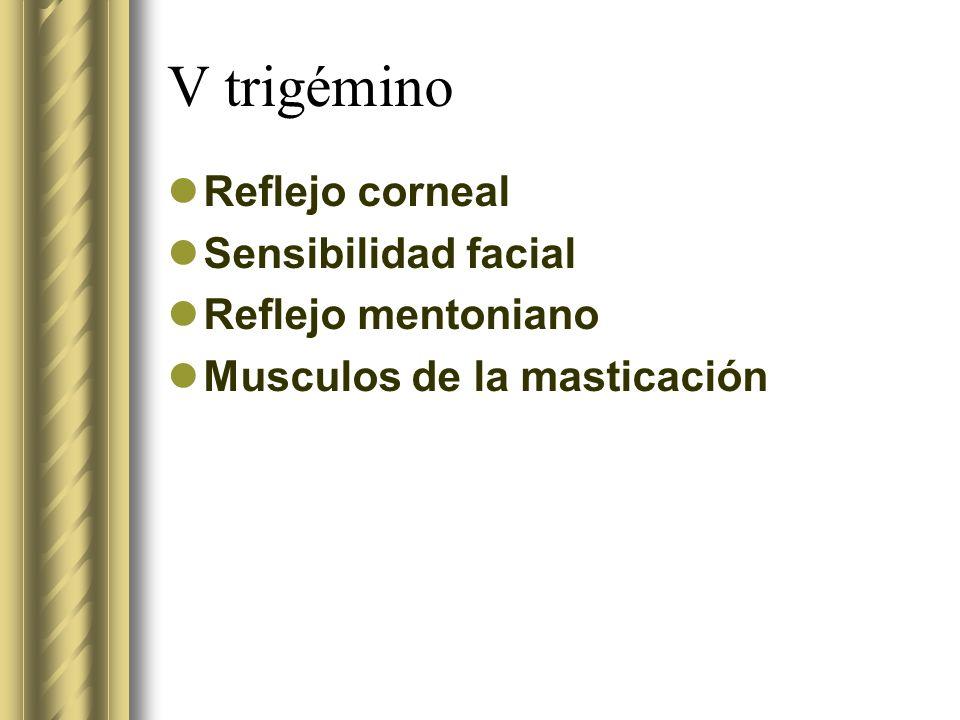 V trigémino Reflejo corneal Sensibilidad facial Reflejo mentoniano Musculos de la masticación