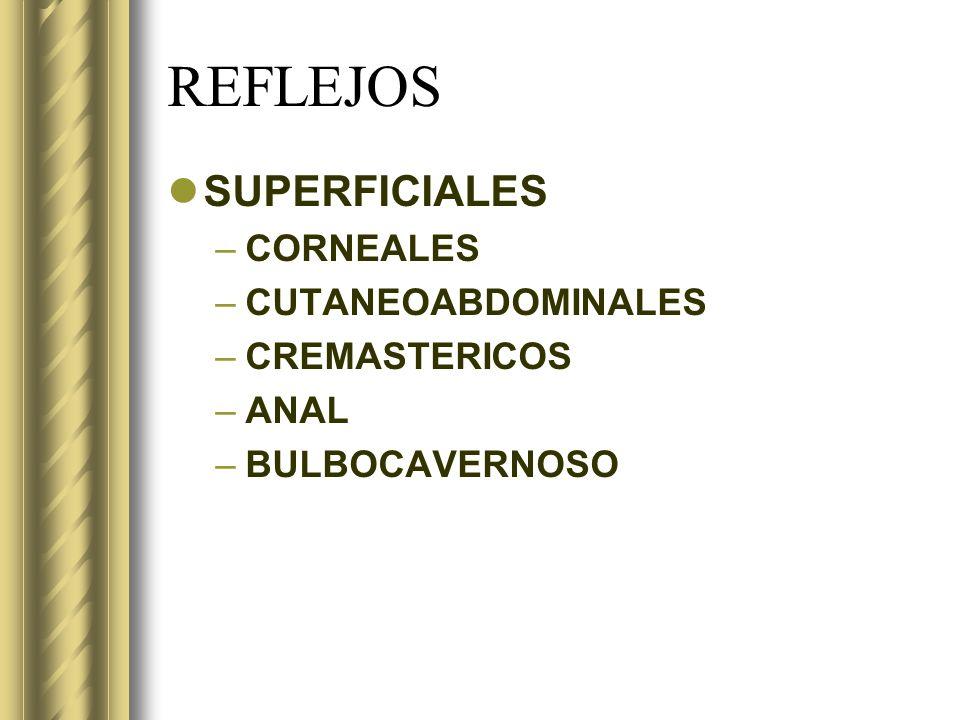 REFLEJOS SUPERFICIALES –CORNEALES –CUTANEOABDOMINALES –CREMASTERICOS –ANAL –BULBOCAVERNOSO
