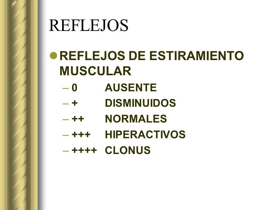 REFLEJOS REFLEJOS DE ESTIRAMIENTO MUSCULAR –0AUSENTE –+DISMINUIDOS –++NORMALES –+++HIPERACTIVOS –++++CLONUS