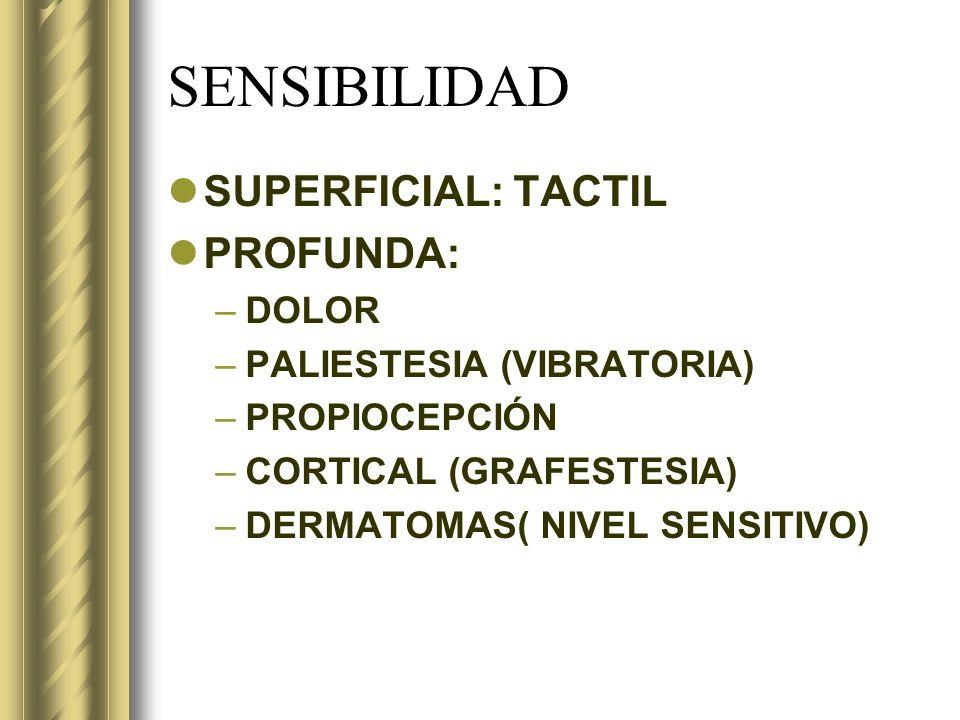 SENSIBILIDAD SUPERFICIAL: TACTIL PROFUNDA: –DOLOR –PALIESTESIA (VIBRATORIA) –PROPIOCEPCIÓN –CORTICAL (GRAFESTESIA) –DERMATOMAS( NIVEL SENSITIVO)
