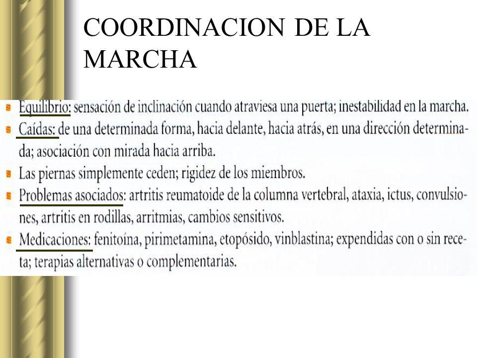 COORDINACION DE LA MARCHA