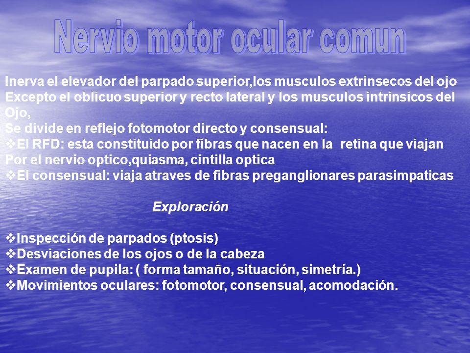 Es el mas pequeño de los nervios craneales e inerva el musculo oblicuo Superior del ojo contralateral El paciente manifestara diplopia (vision Doble).