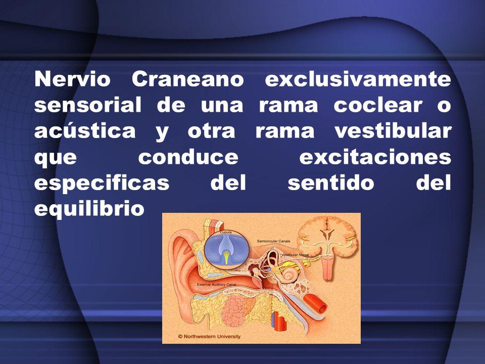 Nervio Craneano exclusivamente sensorial de una rama coclear o acústica y otra rama vestibular que conduce excitaciones especificas del sentido del eq