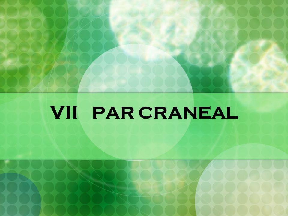 VII PAR CRANEAL