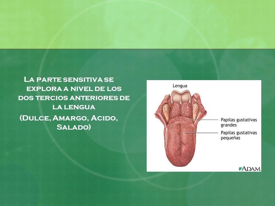 La parte sensitiva se explora a nivel de los dos tercios anteriores de la lengua (Dulce, Amargo, Acido, Salado)