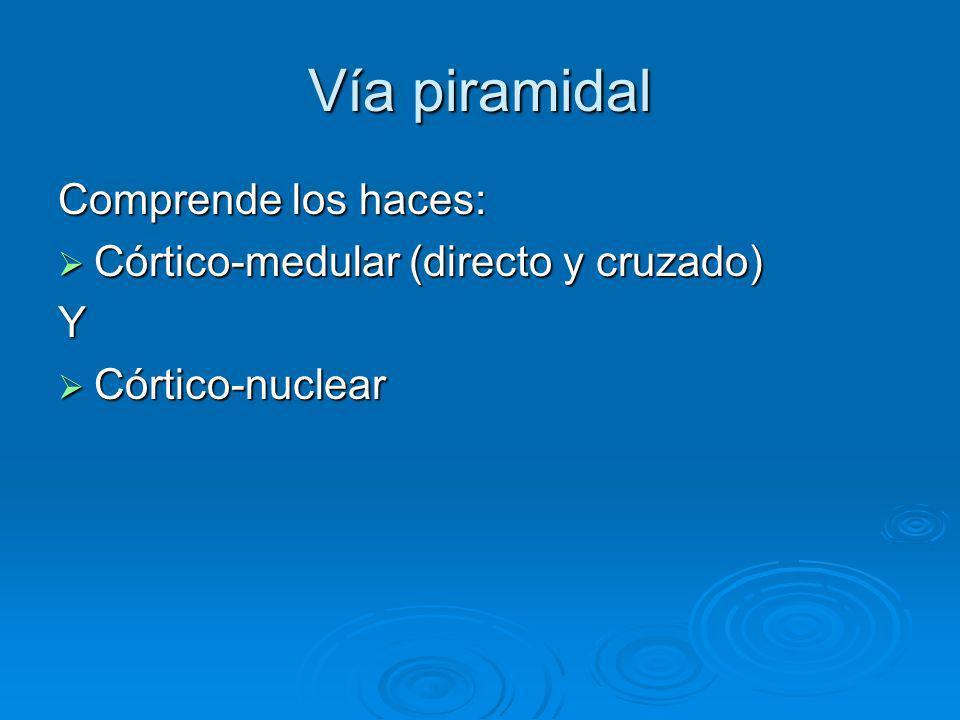 Vía piramidal Comprende los haces: Córtico-medular (directo y cruzado) Córtico-medular (directo y cruzado)Y Córtico-nuclear Córtico-nuclear