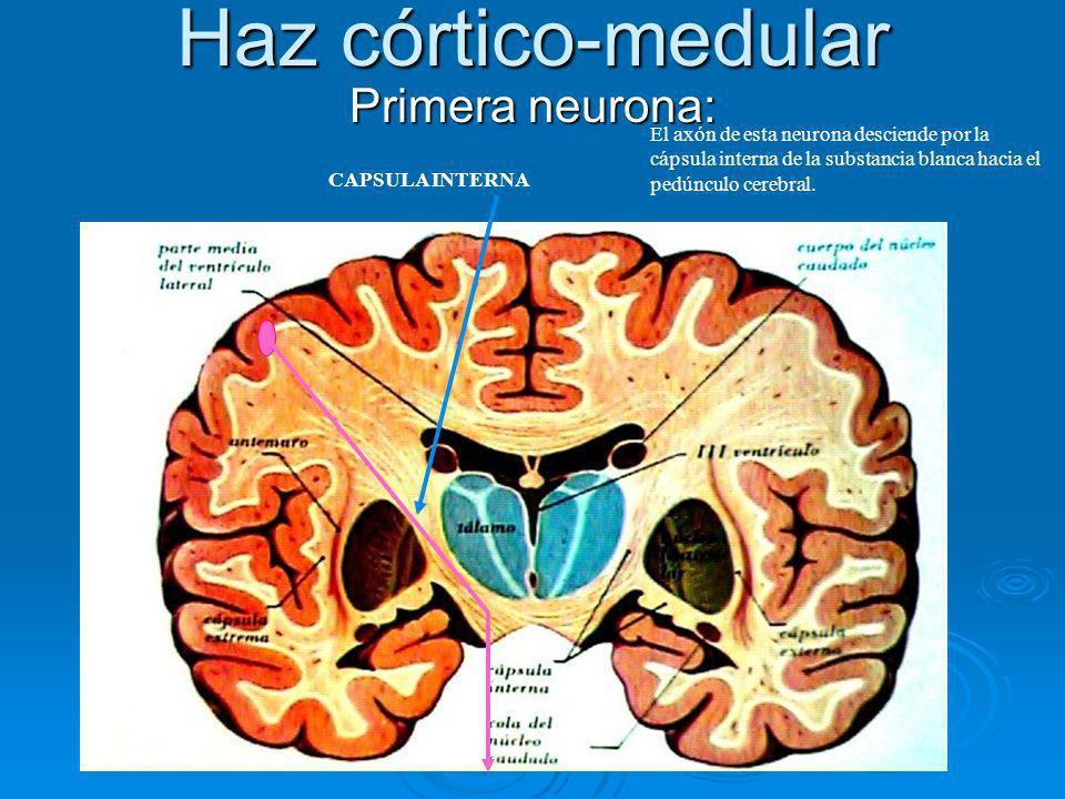 Haz córtico-medular Primera neurona: El axón de esta neurona desciende por la cápsula interna de la substancia blanca hacia el pedúnculo cerebral. CAP