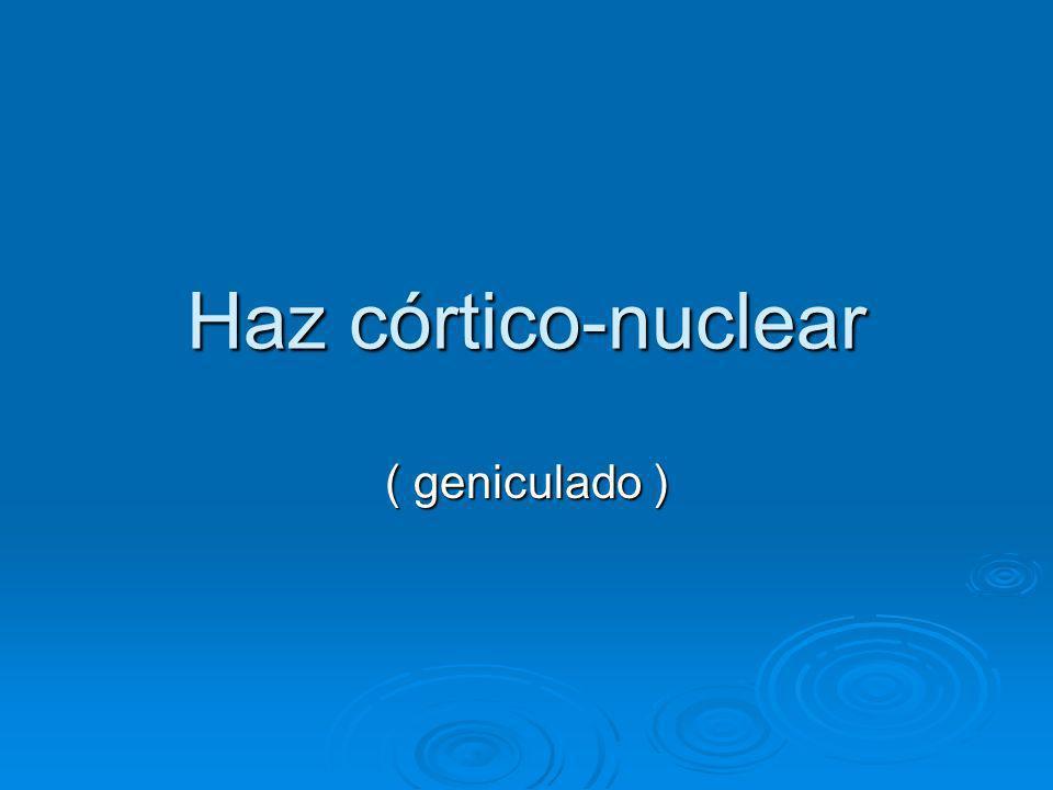 Haz córtico-nuclear ( geniculado )