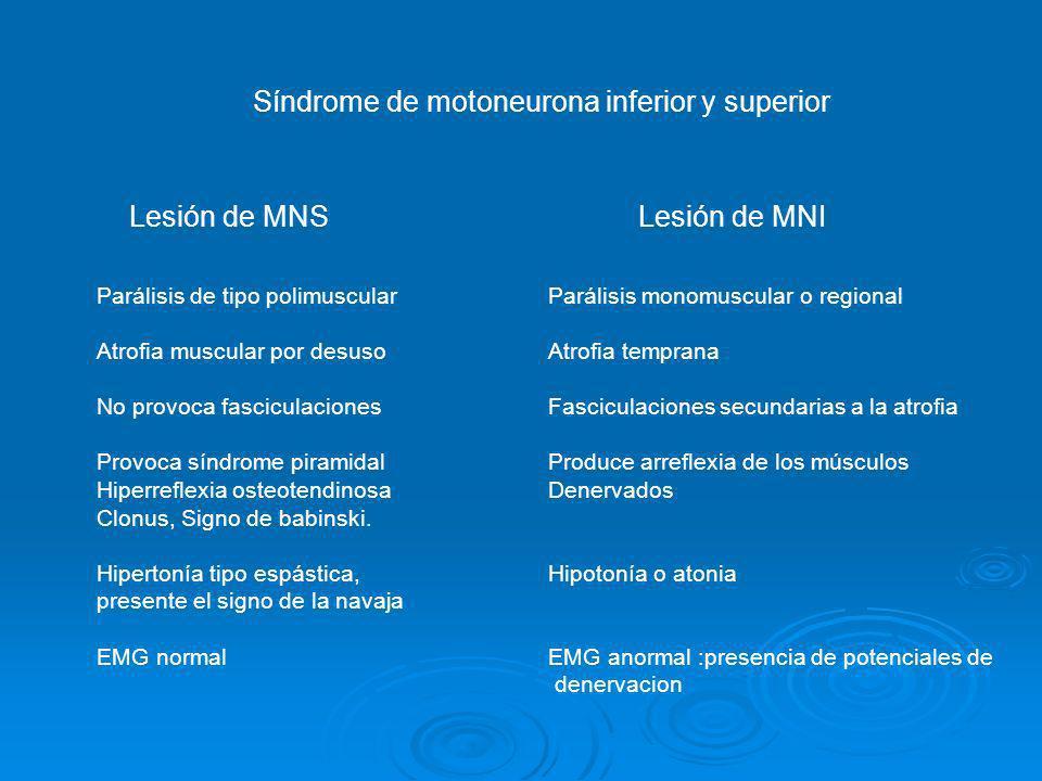 Síndrome de motoneurona inferior y superior Lesión de MNSLesión de MNI Parálisis de tipo polimuscular Atrofia muscular por desuso No provoca fascicula
