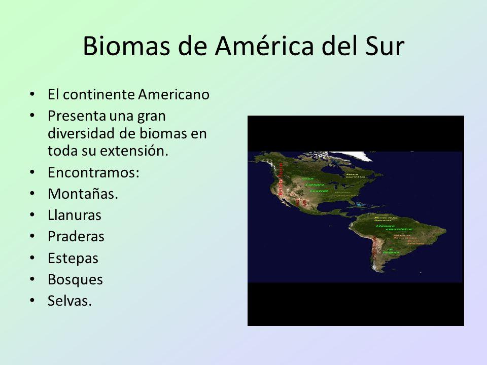 Biomas de América del Sur El continente Americano Presenta una gran diversidad de biomas en toda su extensión. Encontramos: Montañas. Llanuras Pradera