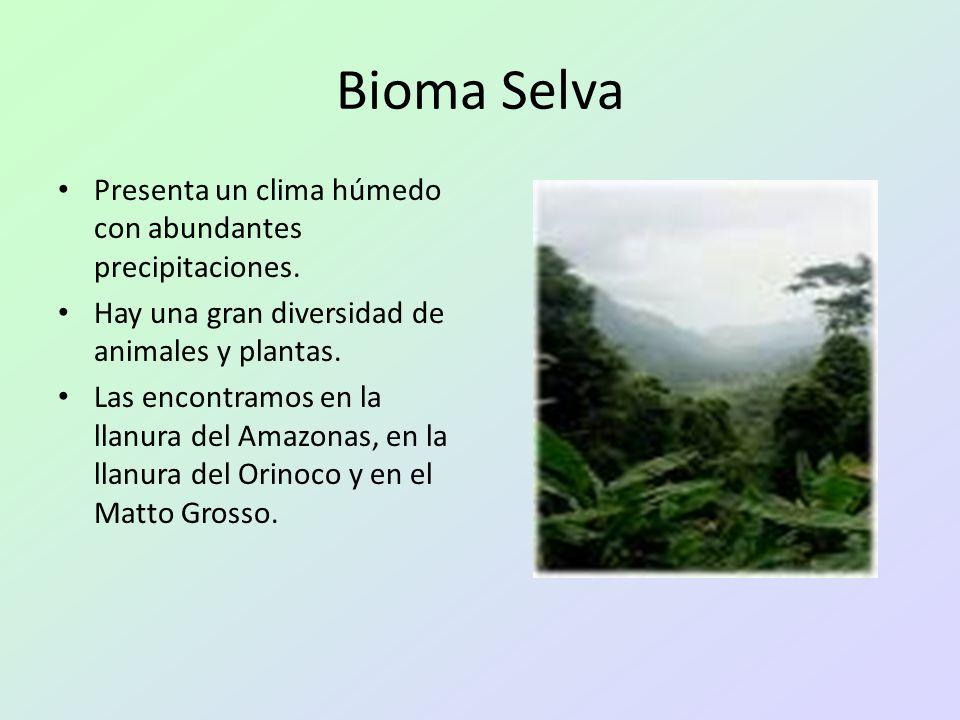 Bioma Selva Presenta un clima húmedo con abundantes precipitaciones. Hay una gran diversidad de animales y plantas. Las encontramos en la llanura del