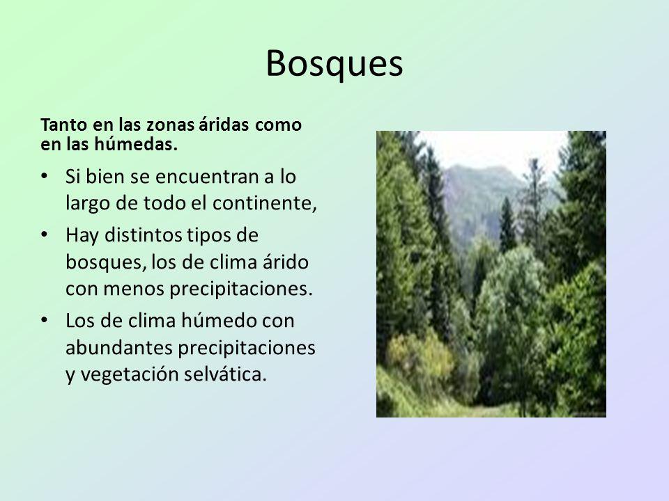 Bosques Tanto en las zonas áridas como en las húmedas. Si bien se encuentran a lo largo de todo el continente, Hay distintos tipos de bosques, los de