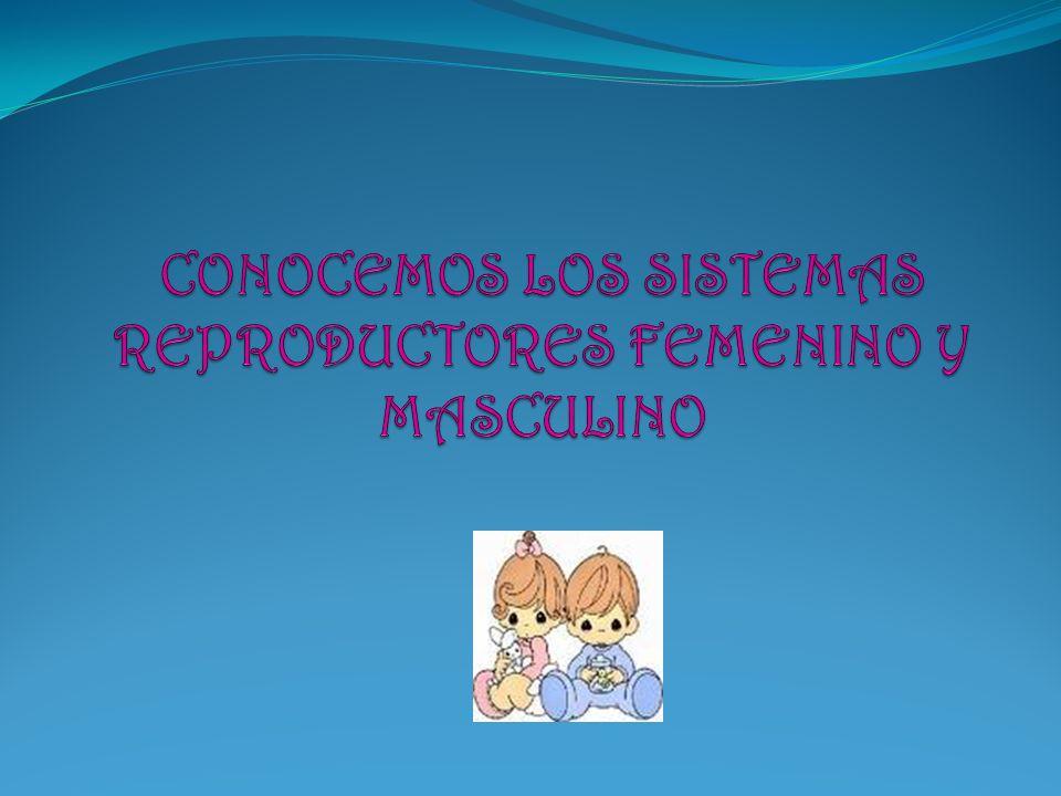 SISTEMA REPRODUCTOR FEMENINO Se producen en las gametas femeninas llamadas óvulos.