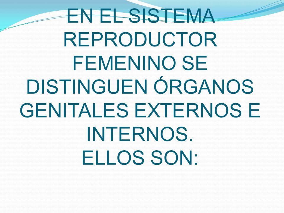 EN EL SISTEMA REPRODUCTOR FEMENINO SE DISTINGUEN ÓRGANOS GENITALES EXTERNOS E INTERNOS. ELLOS SON: