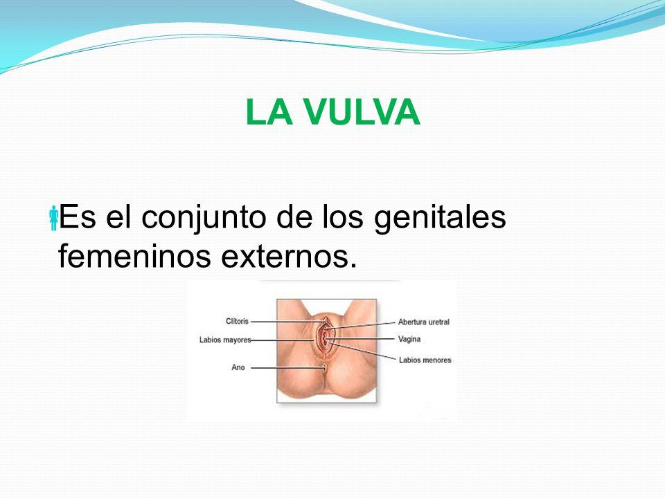 SISTEMA REPRODUCTOR MASCULINO Está constituido por un conjunto de órganos y estructuras que intervienen en la formación, la conducción y expulsión de los espermatozoides.