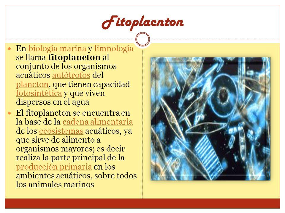 En biología marina y limnología se llama fitoplancton al conjunto de los organismos acuáticos autótrofos del plancton, que tienen capacidad fotosintét
