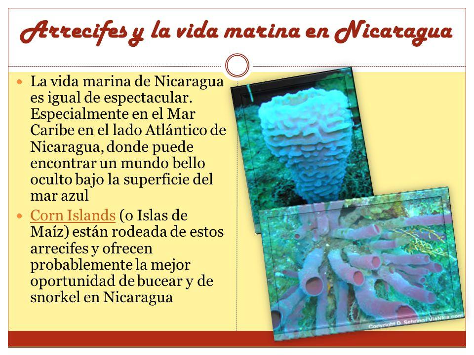 Arrecifes y la vida marina en Nicaragua La vida marina de Nicaragua es igual de espectacular. Especialmente en el Mar Caribe en el lado Atlántico de N