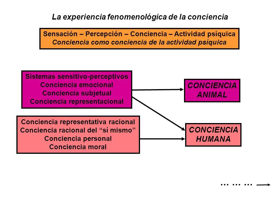 La experiencia fenomenológica de la conciencia Sensación – Percepción – Conciencia – Actividad psíquica Conciencia como conciencia de la actividad psí
