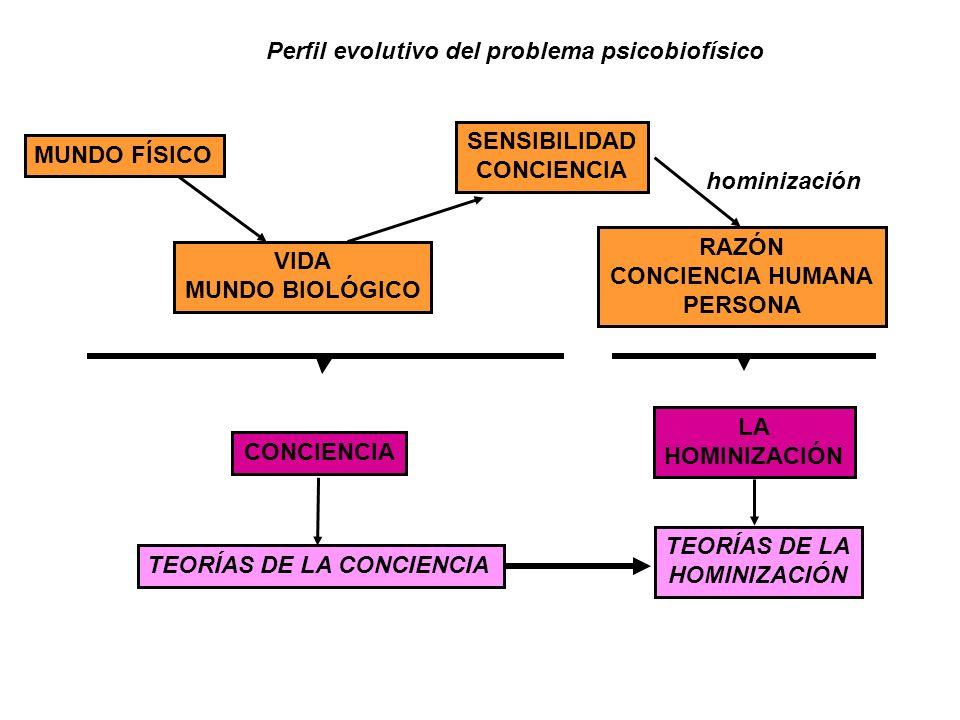Perfil evolutivo del problema psicobiofísico MUNDO FÍSICO VIDA MUNDO BIOLÓGICO SENSIBILIDAD CONCIENCIA RAZÓN CONCIENCIA HUMANA PERSONA hominización CO