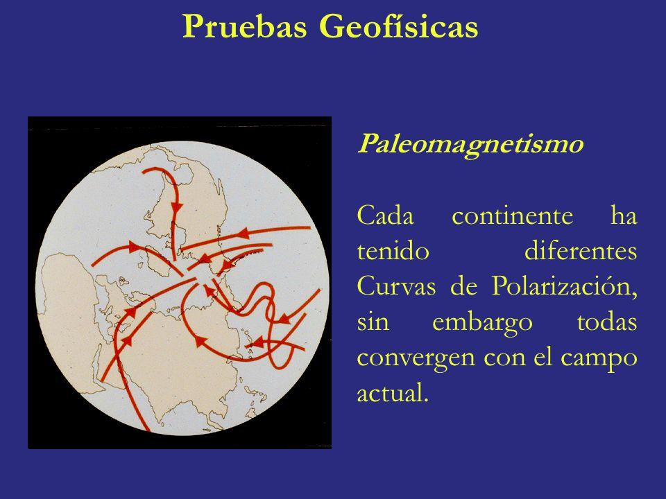 Paleomagnetismo Cada continente ha tenido diferentes Curvas de Polarización, sin embargo todas convergen con el campo actual. Pruebas Geofísicas