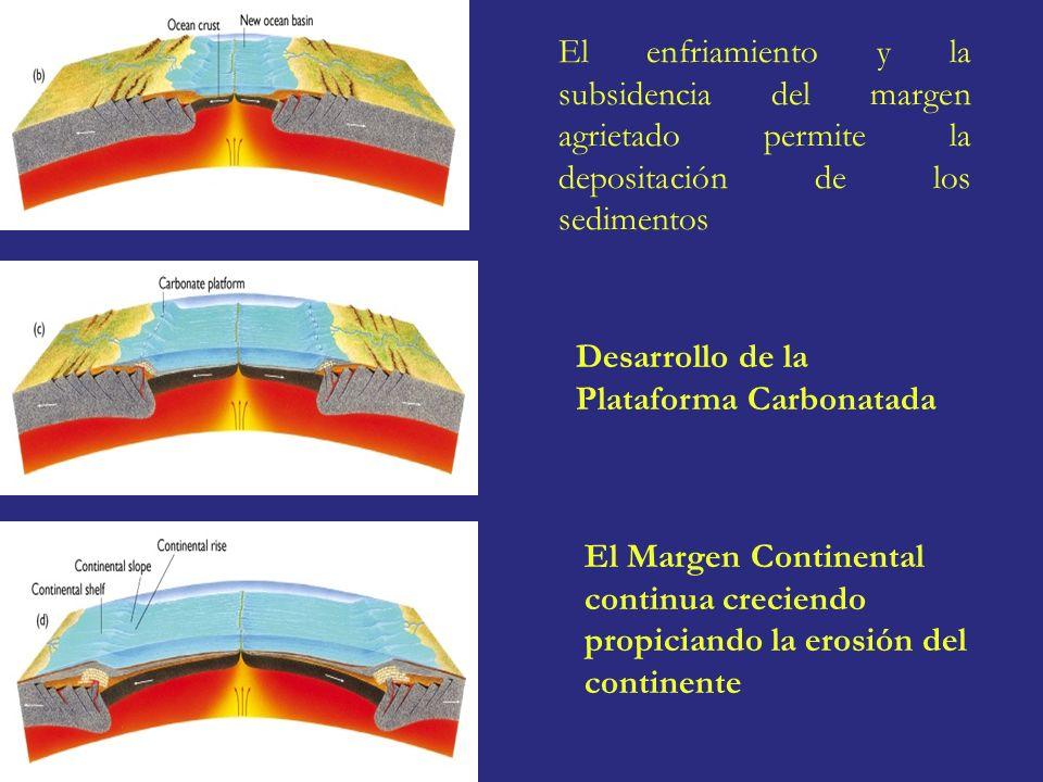 El enfriamiento y la subsidencia del margen agrietado permite la depositación de los sedimentos Desarrollo de la Plataforma Carbonatada El Margen Cont