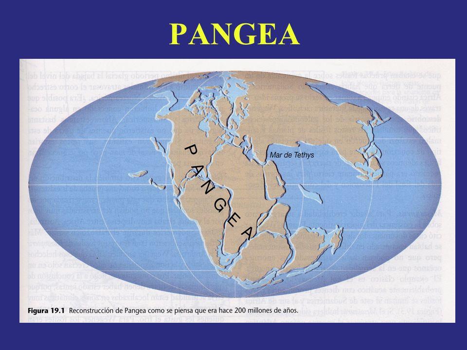 Separación del Pangea 200 millones de años 140 millones de años Actual 65 millones de años