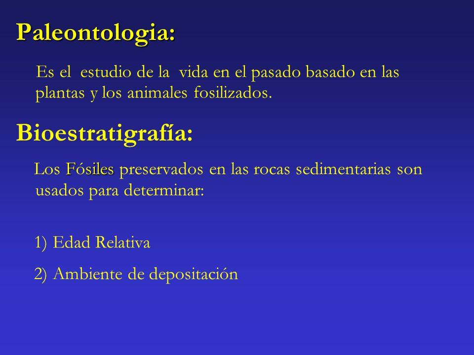 Paleontologia: Es el estudio de la vida en el pasado basado en las plantas y los animales fosilizados. Bioestratigrafía: Fsiles Los Fósiles preservado