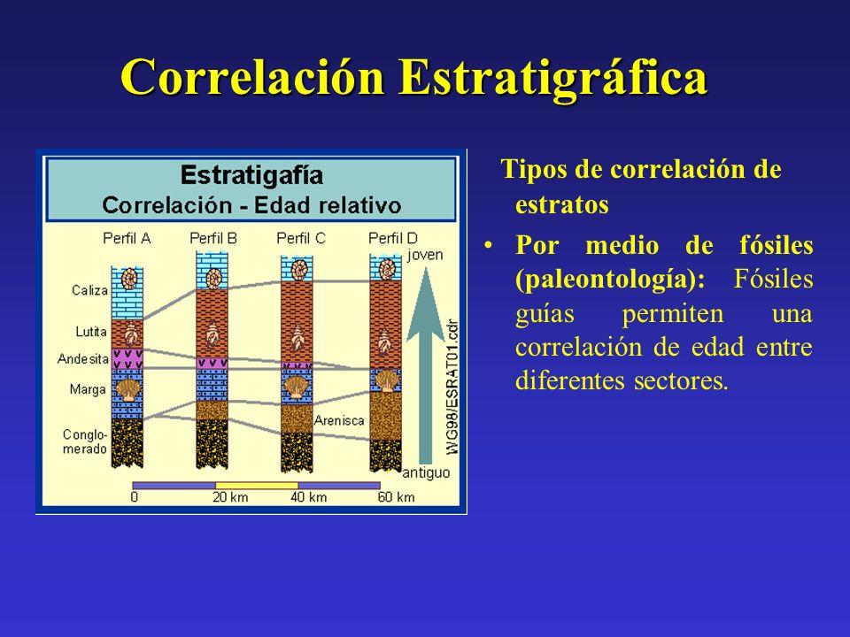 Correlación Estratigráfica Tipos de correlación de estratos Por medio de fósiles (paleontología): Fósiles guías permiten una correlación de edad entre
