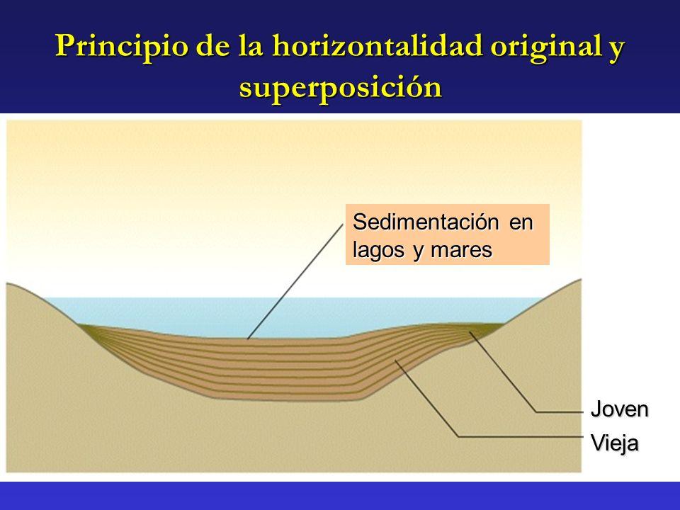 Principio de la horizontalidad original y superposición Sedimentación en lagos y mares Joven Vieja