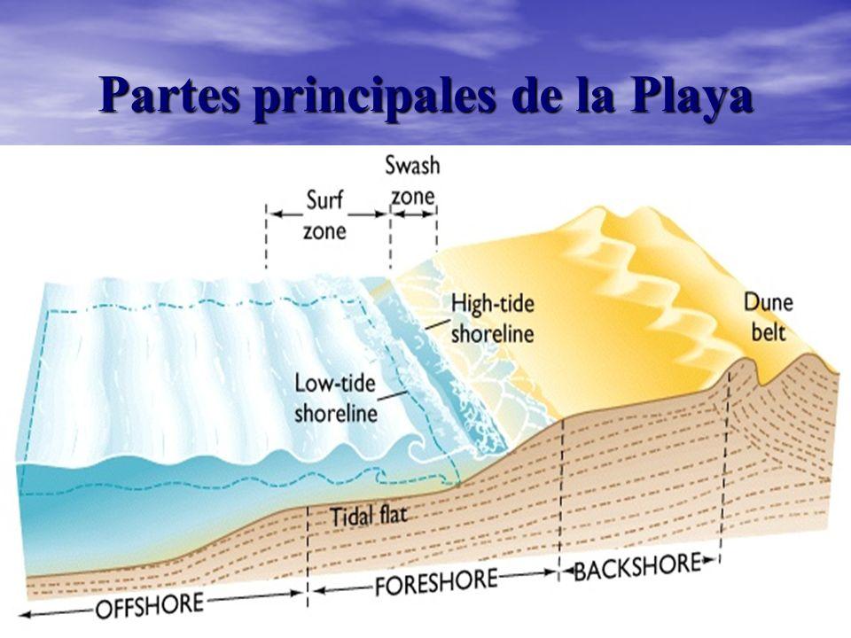 Partes principales de la Playa
