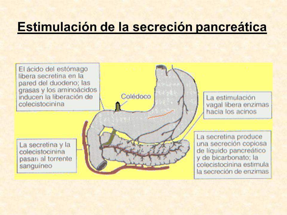 Enzimas pancreáticos con utilidad diagnóstica Amilasa Lipasa Tripsina Quimotripsina Elastasa