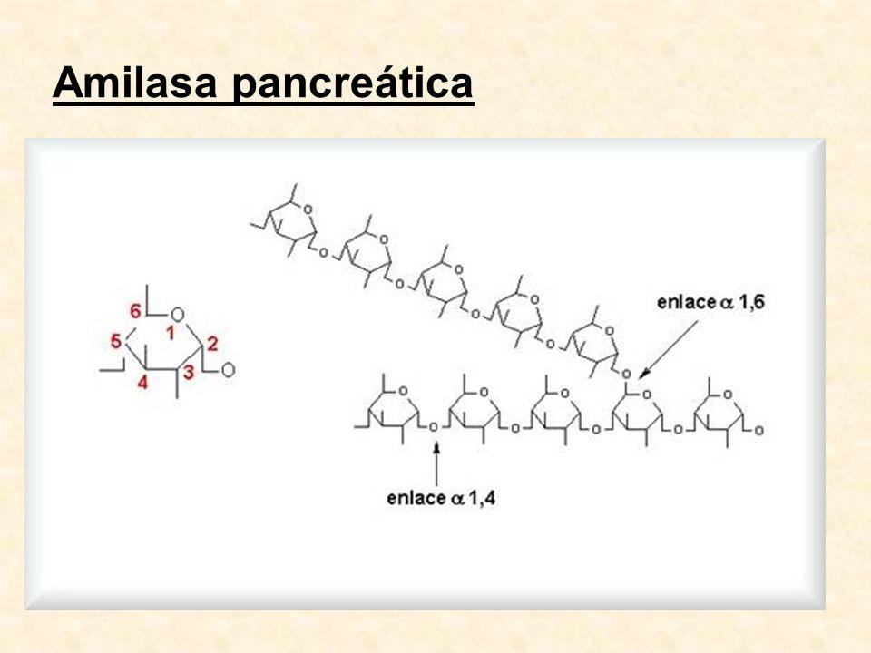 Tripsinas - utilidad clínica En heces y jugo duodenal En suero: tripsinógeno1, tripsina1-AAT Pancreatitis aguda: curso paralelo a amilasa sérica relación con la severidad: formas leves - tripsinógeno 1 formas graves - tripsina-AAT tripsina- 2 macr.