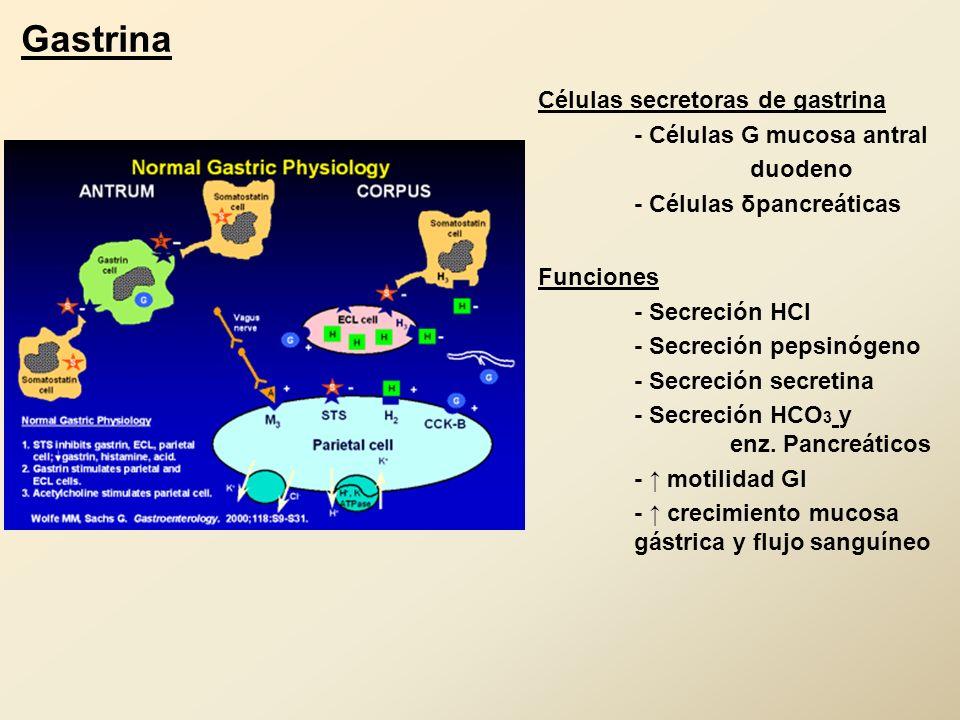 Células secretoras de gastrina - Células G mucosa antral duodeno - Células δpancreáticas Funciones - Secreción HCl - Secreción pepsinógeno - Secreción