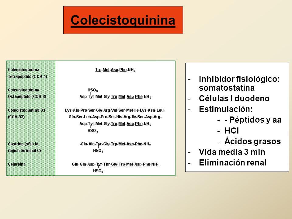 Colecistoquinina -Inhibidor fisiológico: somatostatina -Células I duodeno -Estimulación: -- Péptidos y aa -HCl -Ácidos grasos -Vida media 3 min -Elimi