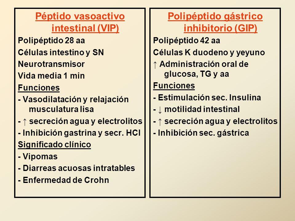 Péptido vasoactivo intestinal (VIP) Polipéptido 28 aa Células intestino y SN Neurotransmisor Vida media 1 min Funciones - Vasodilatación y relajación