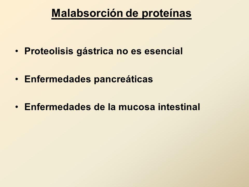 Malabsorción de proteínas Proteolisis gástrica no es esencial Enfermedades pancreáticas Enfermedades de la mucosa intestinal