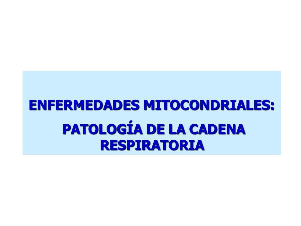 ENFERMEDADES MITOCONDRIALES: PATOLOGÍA DE LA CADENA RESPIRATORIA PATOLOGÍA DE LA CADENA RESPIRATORIA