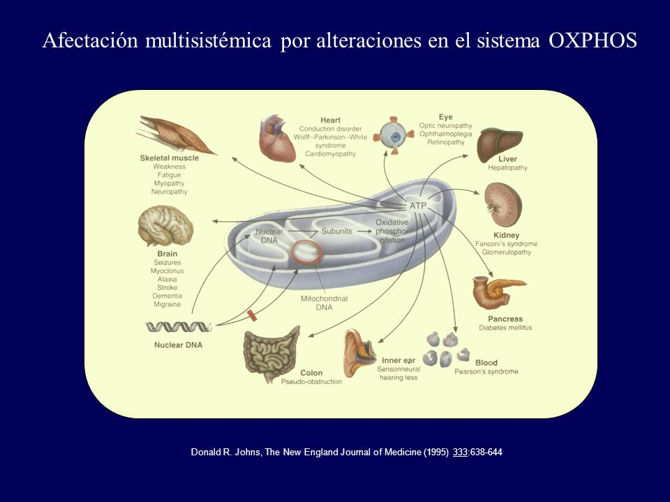 Donald R. Johns, The New England Journal of Medicine (1995) 333:638-644 Afectación multisistémica por alteraciones en el sistema OXPHOS
