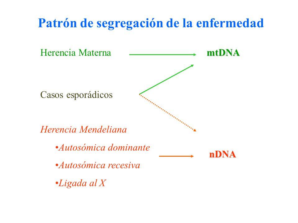 Patrón de segregación de la enfermedad Herencia Materna nDNA Herencia Mendeliana Autosómica dominante Autosómica recesiva Ligada al X mtDNA Casos espo